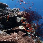 西表 小魚と珊瑚