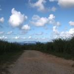 サトウキビ畑と空